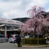 春の山科駅
